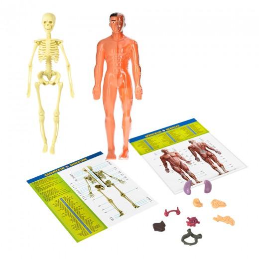 Figura cuerpo humano de CBtoys
